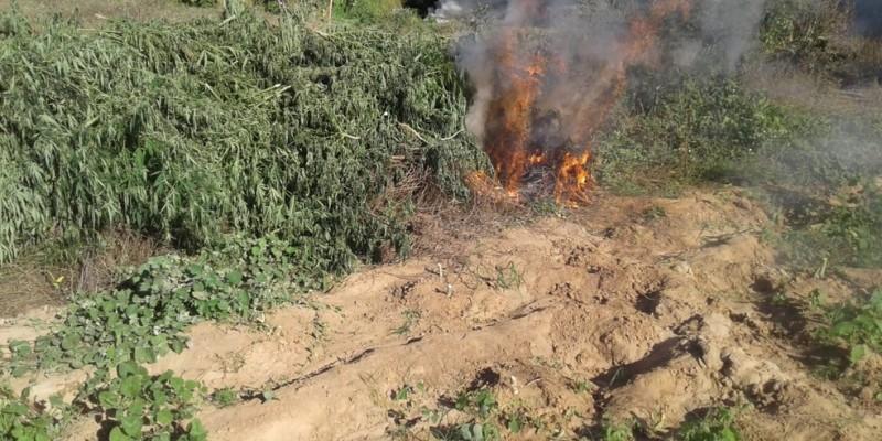 A droga vinha sendo cultivada em três áreas da ilha do Coité