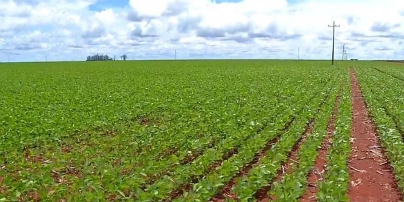 No levantamento, serão avaliadas o desenvolvimento de áreas plantadas de culturas de 1ª safra e as intenções de plantio para as culturas de 2ª safra
