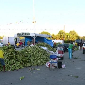 Com expectativa de crescimento nas vendas, começa o plantão do milho no Ceasa