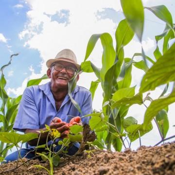 Cerca de 600 famílias de agricultores do Cabo recebem sementes de milho para a próxima safra