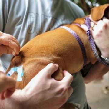 Distritos 1 e 2 recebem vacinação para cães e gatos