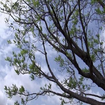 Ação no Parque Santana realiza plantio de 200 árvores
