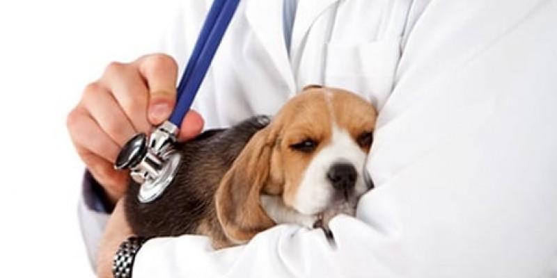 Em todo o Estado, são mais de 4.500 médicos veterinários em atuação