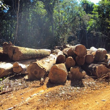 PRF apreende madeira ilegal da Amazônia em Petrolina