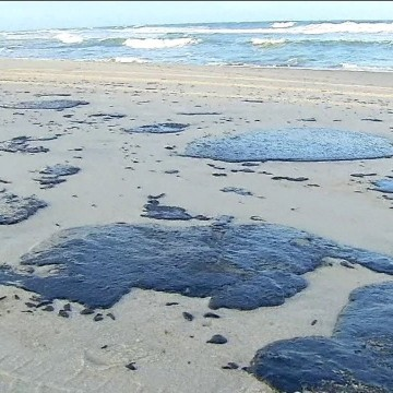 UFPE vai lançar edital para mapear danos causados pelo derramamento de óleo