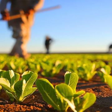 Articulação dos estados nordestinos para exportação de produtos agrícolas
