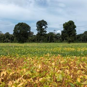 Programa Campo Novo Leva quinhentas toneladas de semente ao sertão pernambucano
