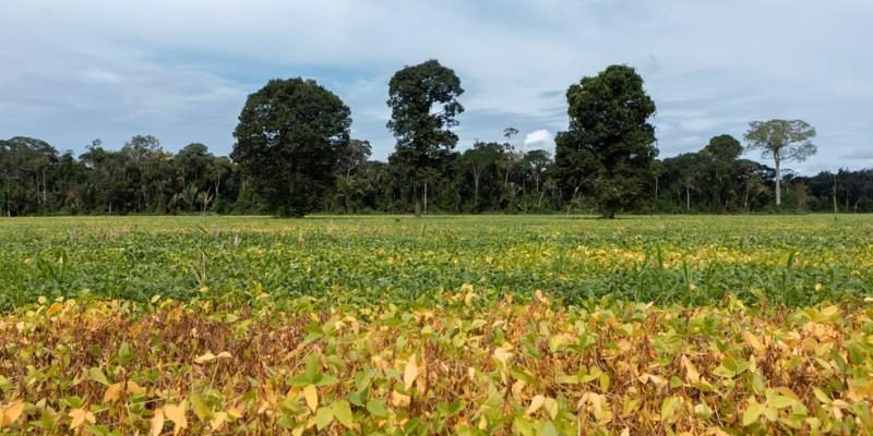 Agricultores do sertão de Pernambuco começaram a receber as sementes que vão ser plantadas no início do período conhecido como quadra chuvosa, no semiárido do estado