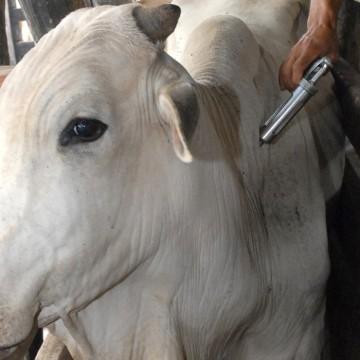 Adagro realiza segunda etapa de vacinação contra a febre aftosa