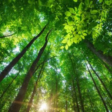Fórum Pernambucano de Mudança do Clima discute retomada da economia de maneira sustentável