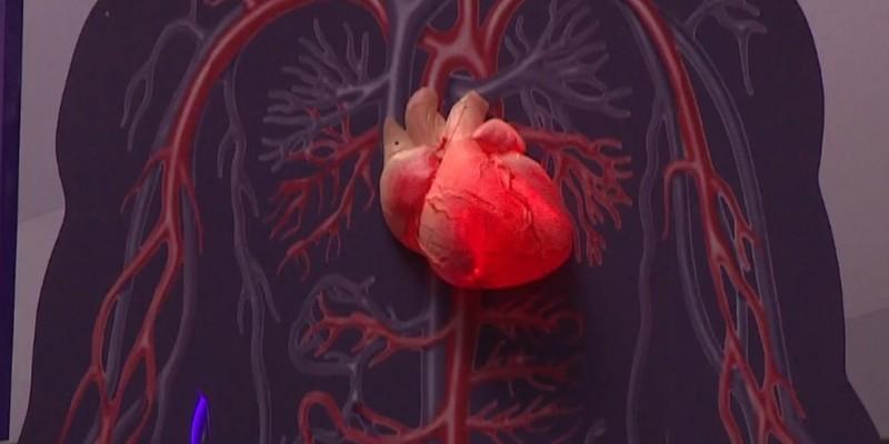 Campanha brasileira, Setembro Vermelho, busca conscientizar a população sobre os riscos das doenças e a necessidade do acompanhamento cardiológico para prevenção