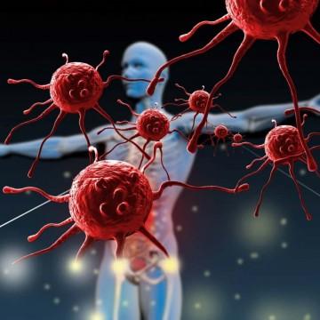 Bom funcionamento do sistema imunológico é fundamental para a prevenção de doenças