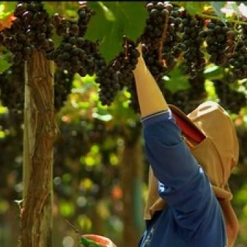 Produtores  comemoram retirada de impostos sobre exportações de frutas