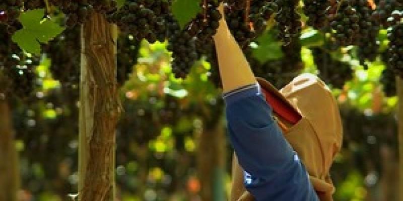 De acordo com Jailson Lira  a mudança vai possibilitar a expansão da presença das frutas pernambucanas no mercado internacional