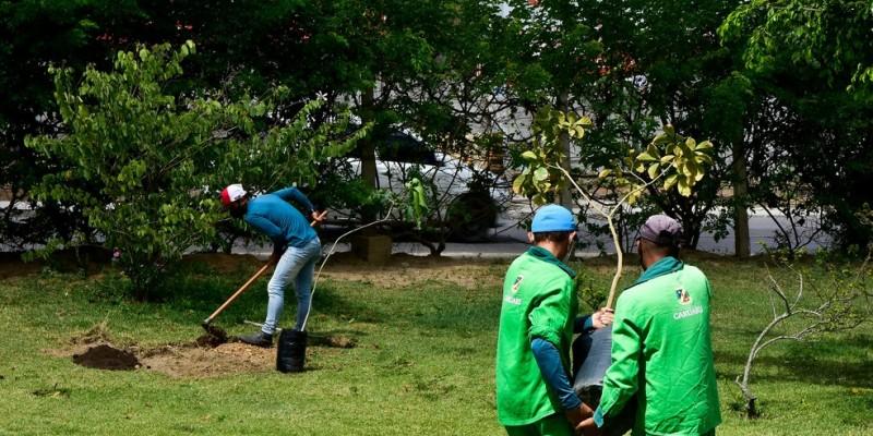 O biólogo e professor, Alexandre Henrique, comenta sobre a arborização do município