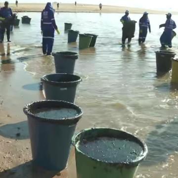 Manchas de óleo chegam as praias do Litoral Norte de Pernambuco