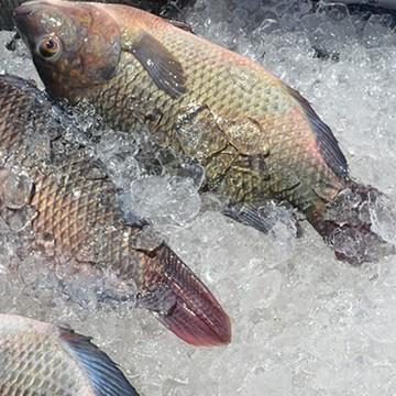 Vigilância Sanitária realiza fiscalização de pescados
