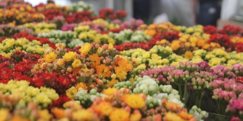 A adaptação das flores na região Agreste