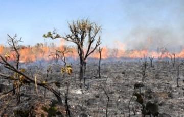 As consequências das queimadas para o meio ambiente