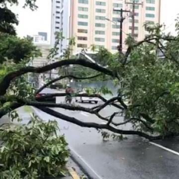 Árvore cai após chuvas registradas no Grande Recife