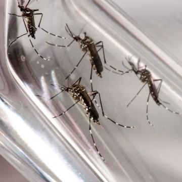 Pernambuco registra segundo caso de morte por dengue