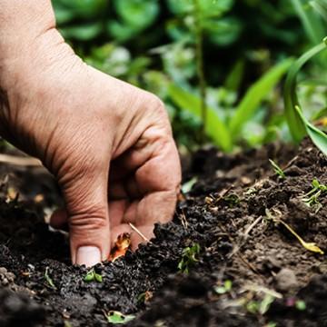 O solo é responsável por 44% das emissões de gases efeito estufa no Brasil
