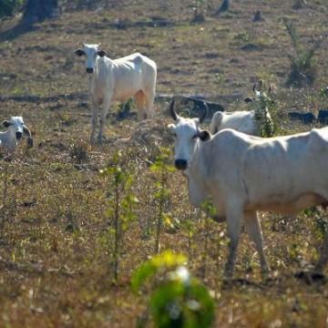 Agropecuária nordestina ganha plano de ação para o seu desenvolvimento