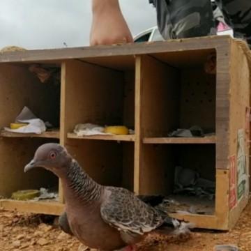 Quase 300 animais são soltos pela Agência Estadual de Meio Ambiente na cidade de Salgueiro