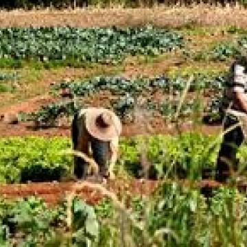 Agricultores perdem colheitas e veem demanda sumir em meio a incertezas do coronavírus