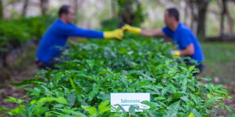 Entre os investimentos para expandir as ações ambientais desenvolvidas, a companhia executa as obras de reforma do viveiro de reflorestamento em Bonito
