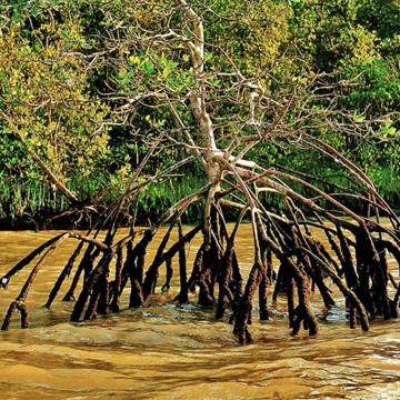 Justiça Federal do RJ suspende decisão do Conama que tira proteção de manguezais e restingas
