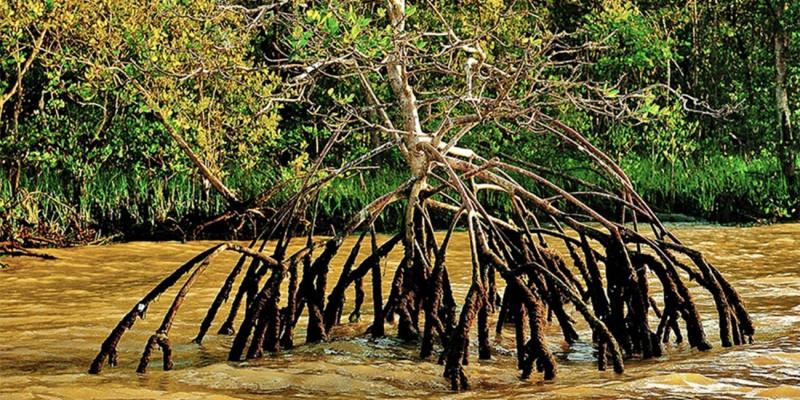 Juíza diz que derrubadas de resoluções são 'evidente risco de danos irrecuperáveis ao meio ambiente'